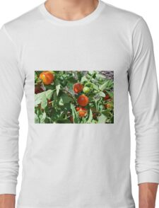 Tomatoes in the garden Long Sleeve T-Shirt