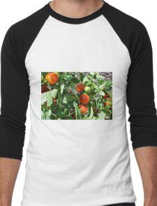 Tomatoes in the garden Men's Baseball ¾ T-Shirt