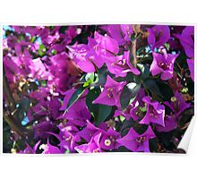 Natural background of purple flowers Poster