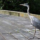 Heron by Ellesscee