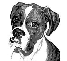 Boxer Eyes ~ Black and white Photographic Print