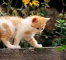 Cute Kitten/Cat by Speeros