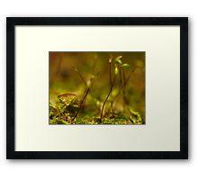 stink bug posing Framed Print