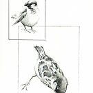 Terschelling Sparrow II by Cameron Hampton