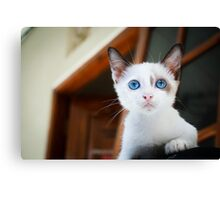 Cute Cat with Blue Eyes Canvas Print