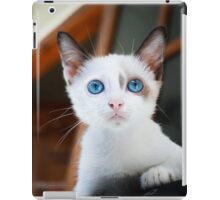 Cute Cat with Blue Eyes iPad Case/Skin