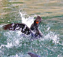 Cormorant Feeding  by SoftHope