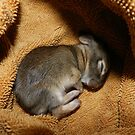 Baby Cotton Tail by Heather Crough