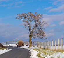 Tree Of Winter by James Brotherton