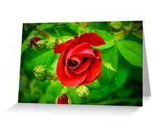 A Single Red Rose Greeting Card