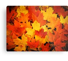 Pile of Colorful Maple Leaves Metal Print