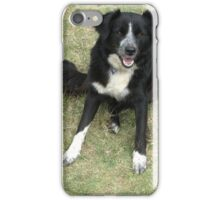 Summer the border collie iPhone Case/Skin