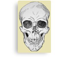 Frontal Skull Anatomical Drawing Canvas Print
