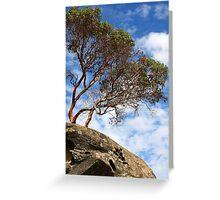 Arbutus Over Sandstone Greeting Card