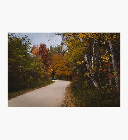 Winding road into the forest Photographic Print