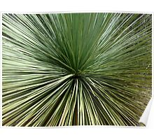 Australien Plant - abstract Poster