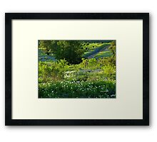 Springtime in Texas Framed Print