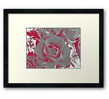 Duotone Rose Framed Print