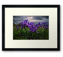 Wild Iris ~ Finley Refuge Wildflowers ~ Framed Print