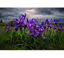 Wild Iris ~ Finley Refuge Wildflowers ~ Photographic Print