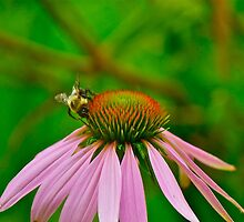 Busy Bumble Bee 3 by Carolyn Clark