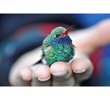 A Bird in the Hand  Photographic Print