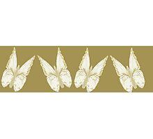Golden Butterflies see also kazm gilded-butterfly Photographic Print