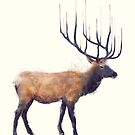 Elk // Reflect by Amy Hamilton