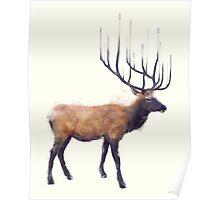 Elk // Reflect Poster
