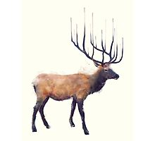 Elk // Reflect Photographic Print