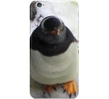 Baby Penguin♡  iPhone Case/Skin
