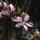 ANBG 22SEP2014 -7 by beeden