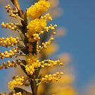 ANBG 22SEP2014 -8 by beeden