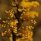 ANBG 22SEP2014 -9 by beeden