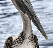 PELLY THE PELICAN  by ✿✿ Bonita ✿✿ ђєℓℓσ