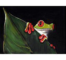 Midnight Mischief  -  Original Painting Red-Eyed Tree Frog Photographic Print