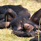 Azie Napping by Amy Atherton