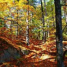 Autumn Forest Killarney by Debbie Oppermann