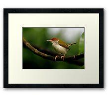 Tailorbird - Sri Lanka Framed Print