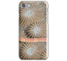 Black-breasted Pipefish iPhone Case/Skin