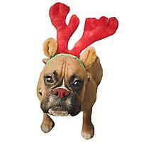 Santa's Reindeer Boxer Dog Cute Christmas Pup Photographic Print