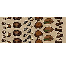 Nuts about Nuts Photographic Print