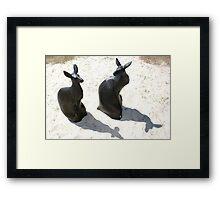 Swell Kangaroo Sculptures Framed Print