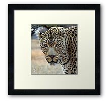 If looks could kill..... Framed Print