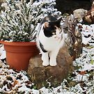 Victoria and the First Snow of the Winter by Dennis Melling