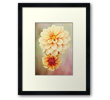 Beautiful Dahlia Blossoms in Warm Hues Framed Print