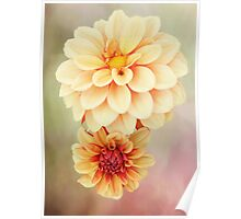 Beautiful Dahlia Blossoms in Warm Hues Poster