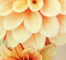 Beautiful Dahlia Blossoms in Warm Hues Sticker