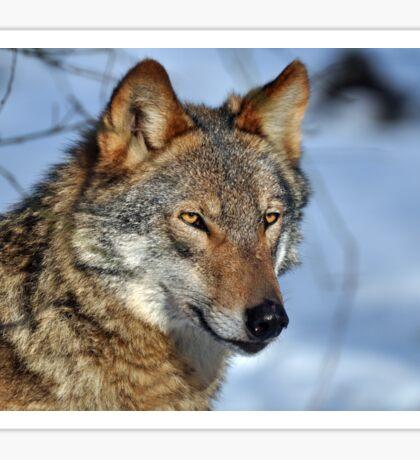 wolfs eyes Sticker