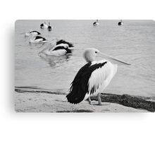 Feathered Friends Canvas Print